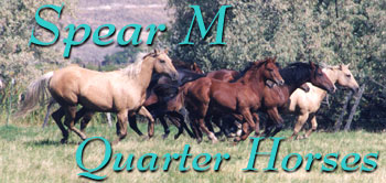 Breeding Legendary Quarter Horse Bloodlines since 1941